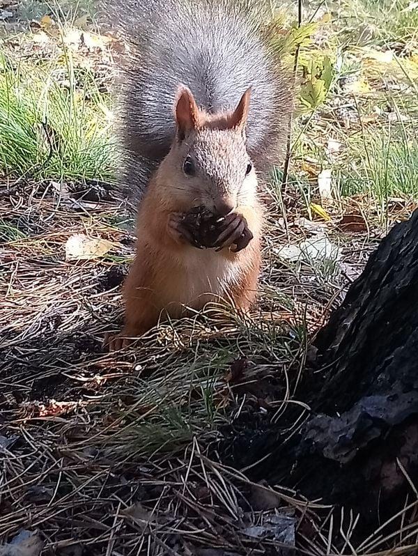 Squirrel lunch thumbnail