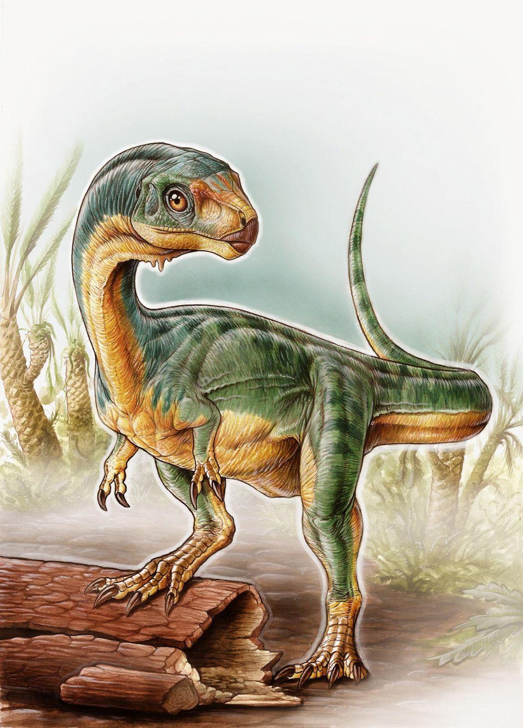 Meet Chilesaurus, a New Raptor-Like Dinosaur With a Vegetarian Diet
