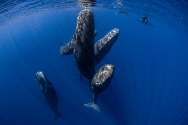 Social whales thumbnail