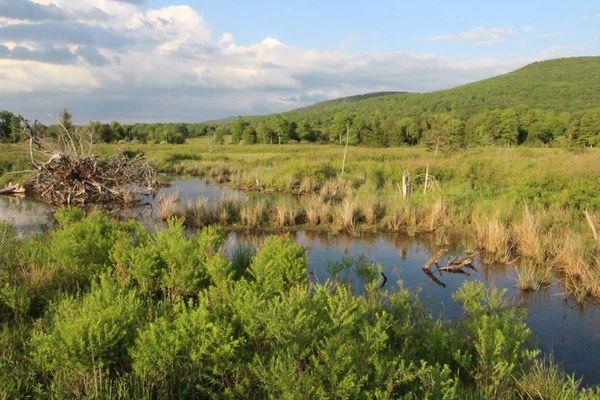 Canaan Valley Creek thumbnail