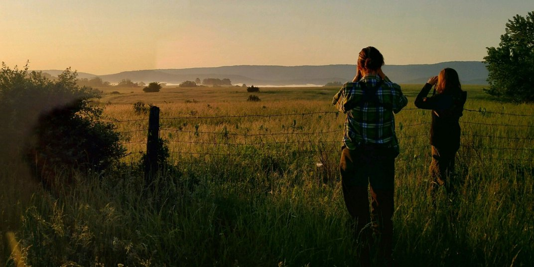 Researchers stand near a fence in an overgrown field and use binoculars to search for bobwhite quails.