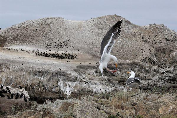 Bird Island Action thumbnail