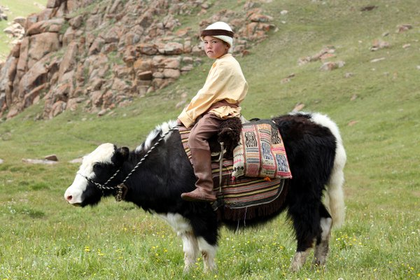 The Kyrgyz yak boy thumbnail