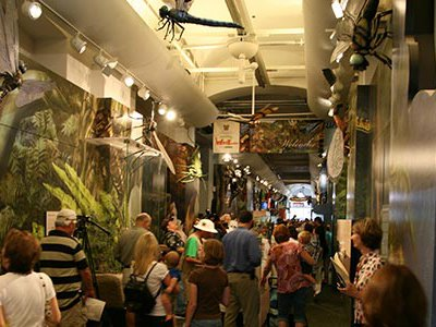 The Audubon Insectarium is the largest freestanding museum in the country dedicated solely to insects and relatives.