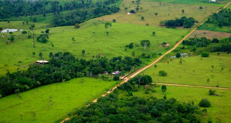 Large swaths of Brazil's Amazon have been wiped out, but deforestation there is starting to slow.