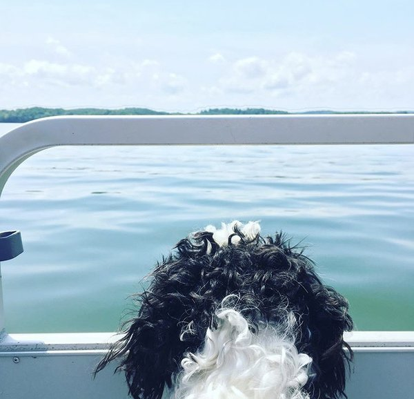 Jake watching the water on the boat. thumbnail