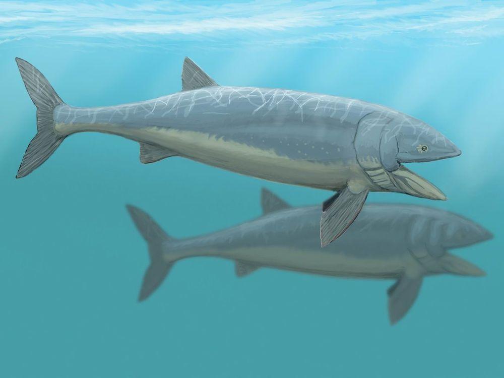 big bony fish