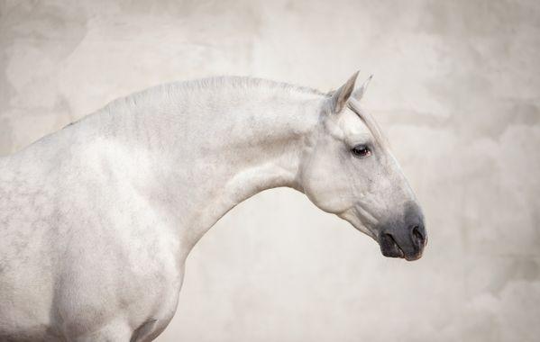 Wonderful russian horse thumbnail