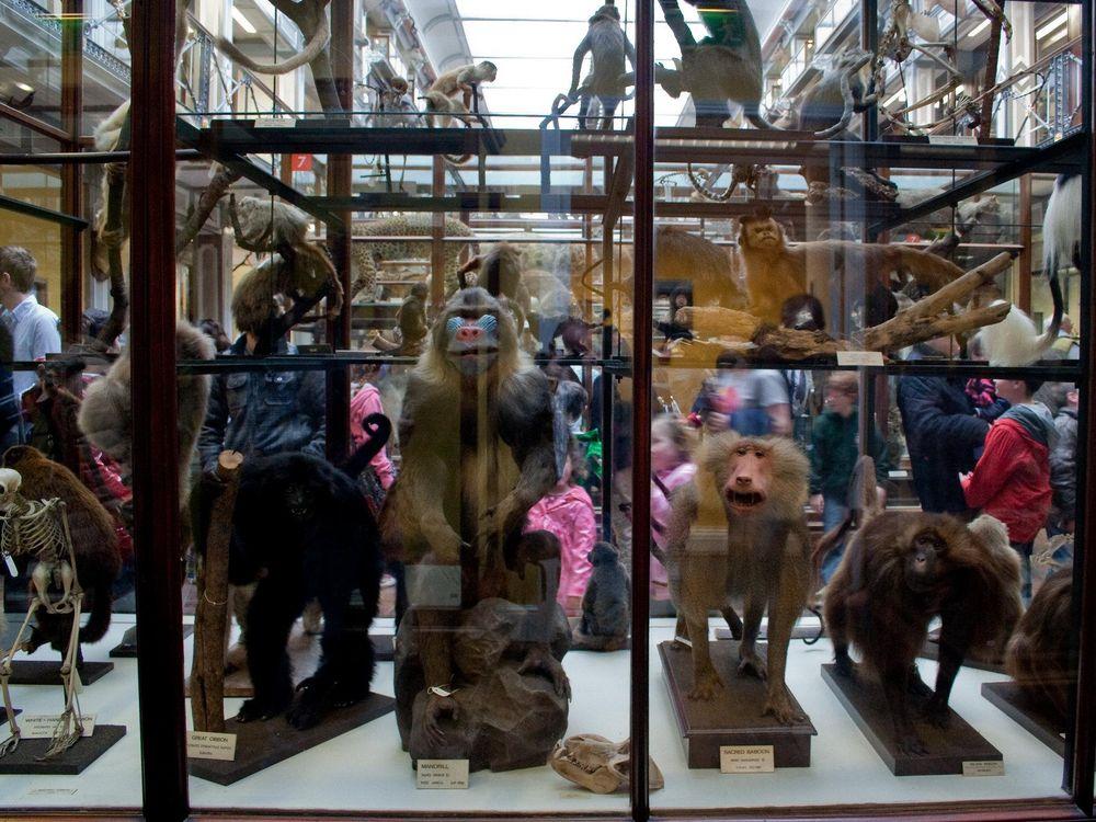 Animal specimens at Dublin's Natural History Museum