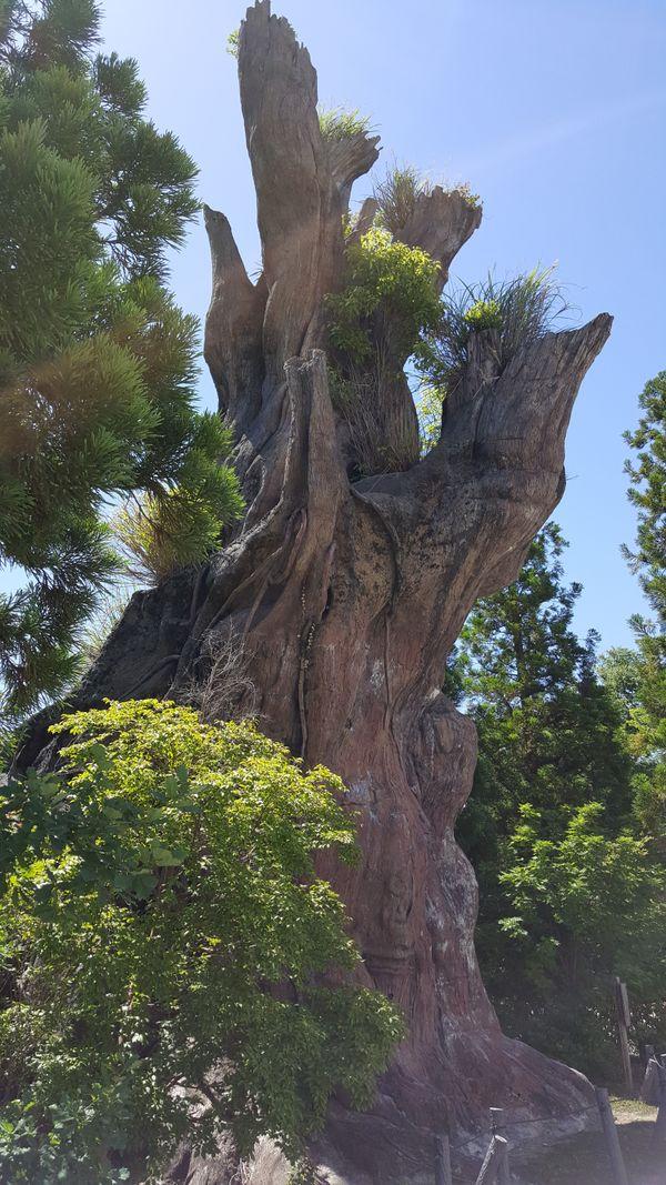 tree stump in botanical garden thumbnail
