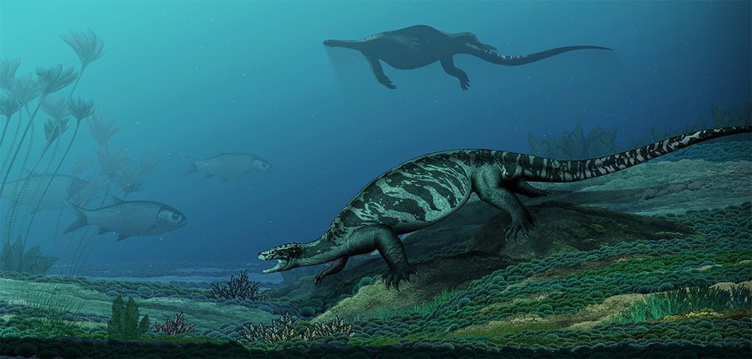 Newly Discovered Turtle Ancestors Chomped With Beaks But Bore No Shells