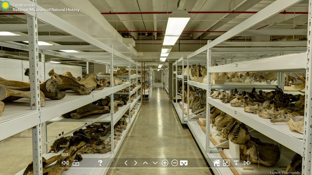 White warehouse shelves holding the National Museum of Natural History's collection of antlers.