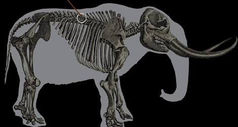 The outline of a mastodon skeleton