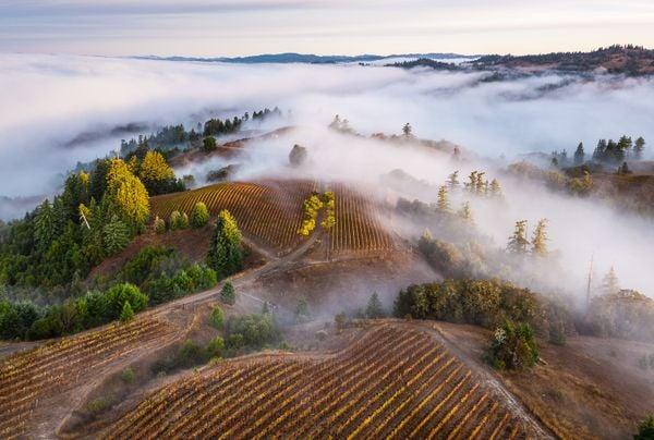 Vineyard Sunrise with Fog thumbnail