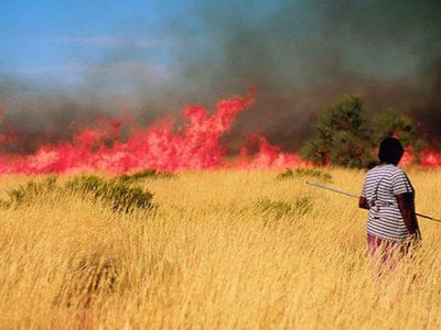 Landscapes have been managed by humans for thousands of years – some sustainably, others less so. The Martu people of Australia burn the grasses in continent's Western Desert. The practice yields food, but also increases biodiversity in the area.