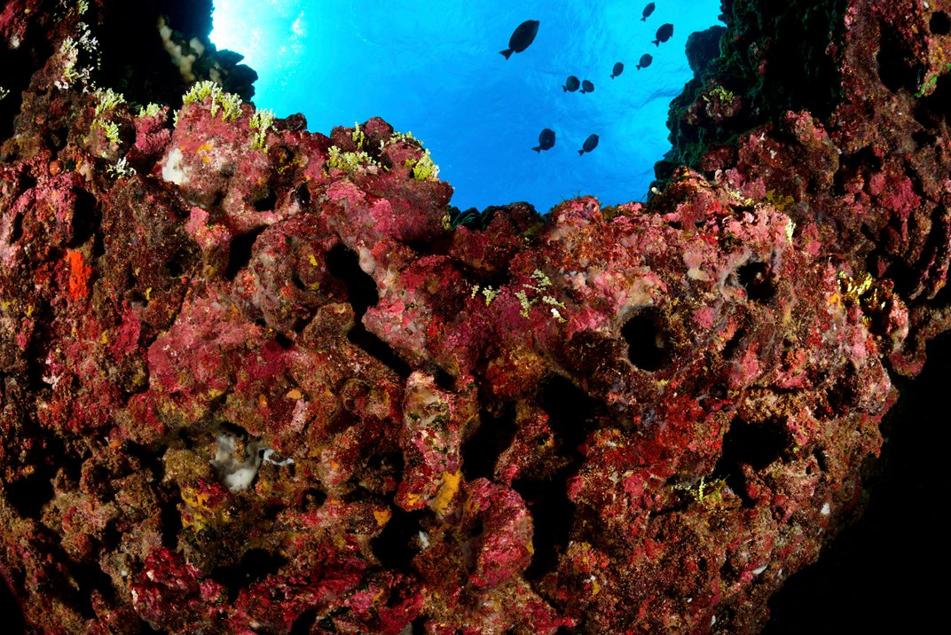 Chile Announces Protections for Massive Swath of Ocean With Three New Marine Parks