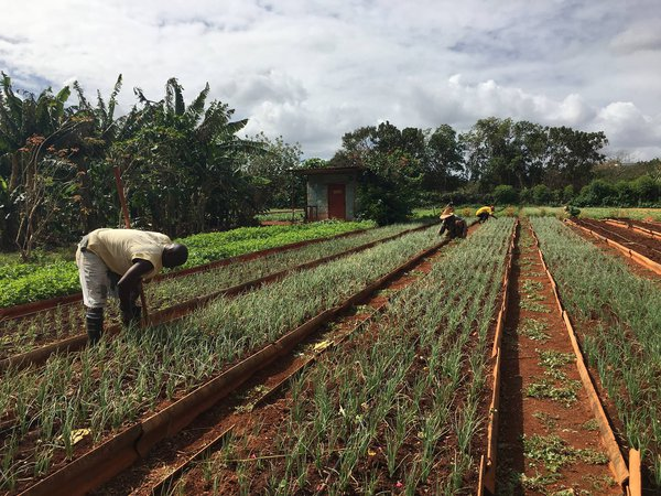 The Alamar Organic Farm in Cuba thumbnail