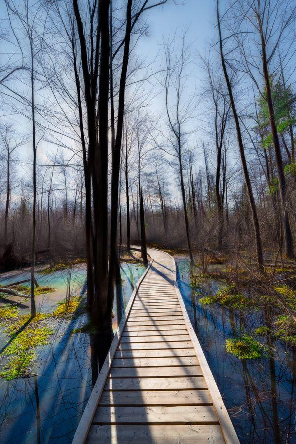 Path of Reflections thumbnail