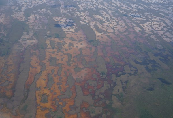 Tannins in the water of the Everglades thumbnail
