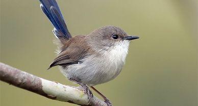 Smartnews-Mother-Birds-388.jpg