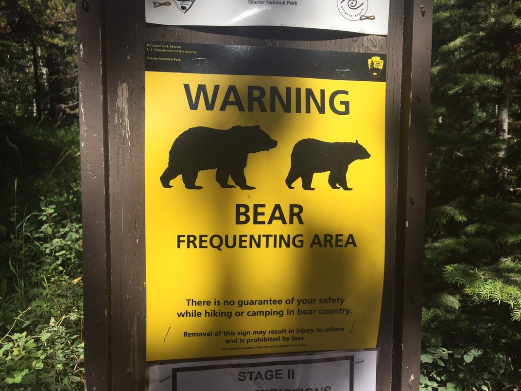 The Deadly Grizzly Bear Attacks That Changed the National Park Service Forever