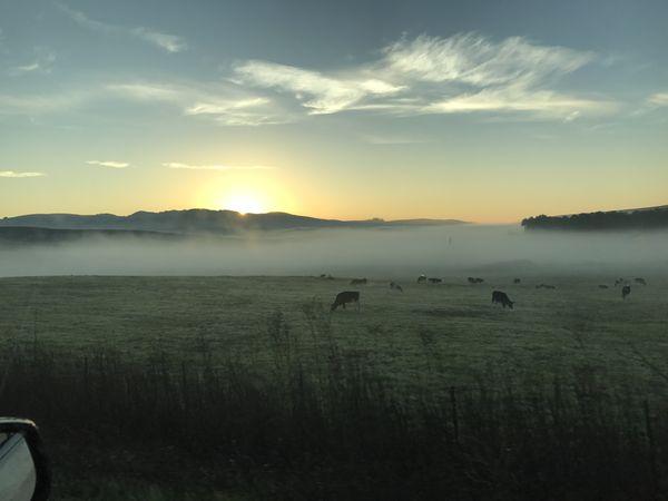 Sonoma farm sunrise thumbnail