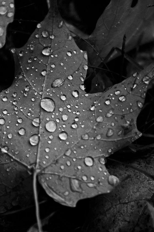 Autumn Rain thumbnail
