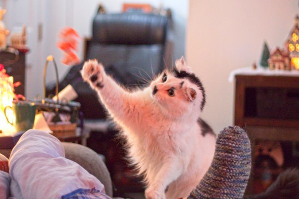 A cats Christmas present thumbnail