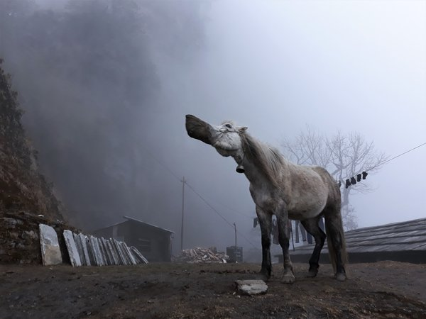 A horse in a cloud- hiking top Himalayan village. Nepal thumbnail