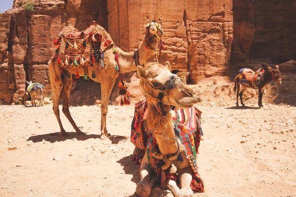 Camels of Petra thumbnail