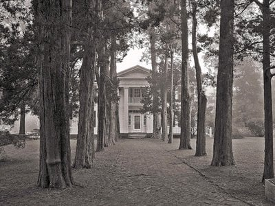 House and Cedar-Lined Walk in Mist, October 2003