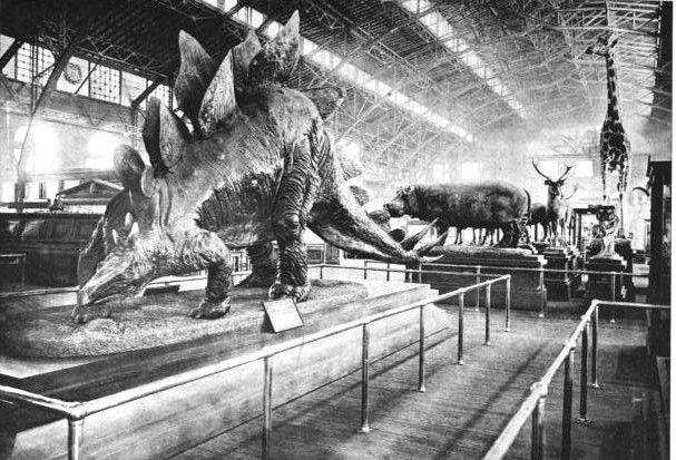 20110520083312stegosaurus-smithsonian.jpg