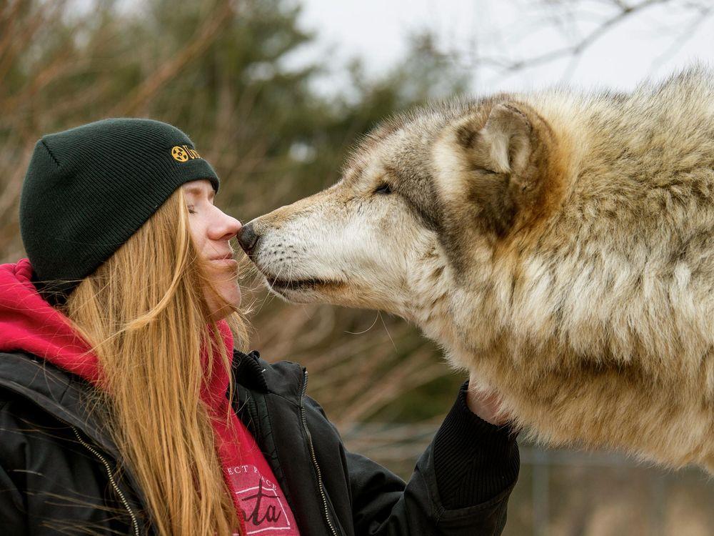 Social Wolf