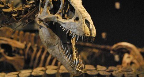 Paleontologists