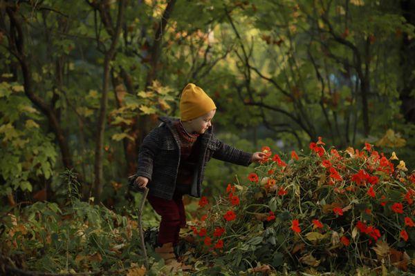 Wild garden thumbnail