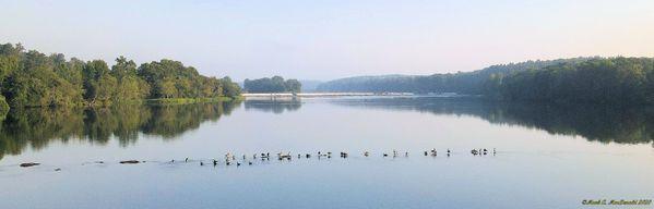 Geese on the Savannah River thumbnail