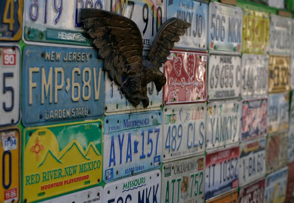 An Eagle and lots of U.S license plates! thumbnail