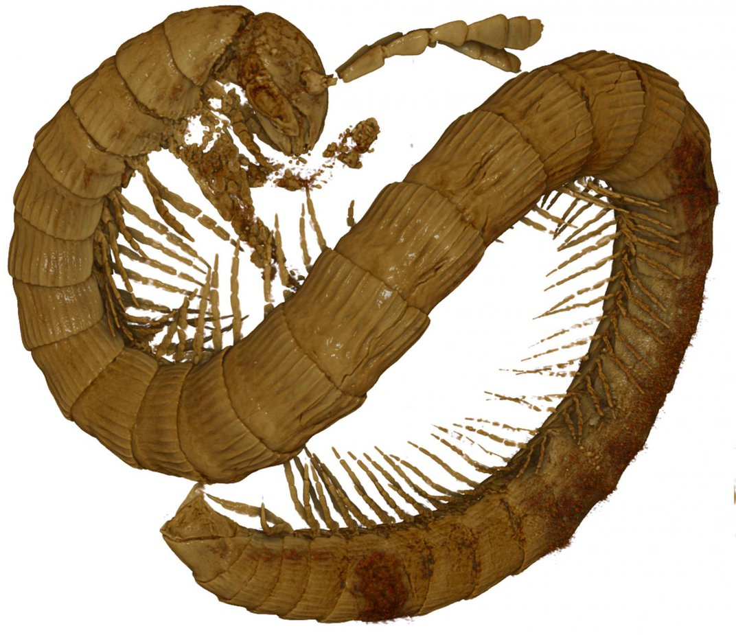 This Petite, 99-Million-Year-Old Millipede Was Entrapped in Amber