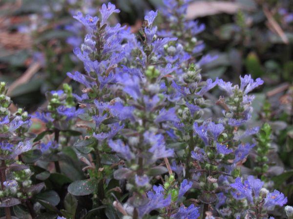 Tiny Flowers thumbnail