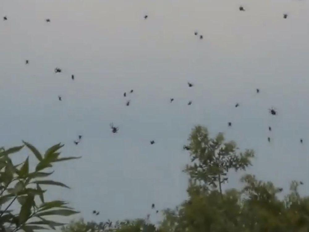 spiders-1-1.jpg