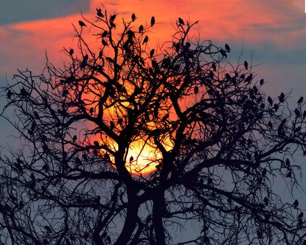 Each tree, a lifeline to many! Save Trees.. thumbnail