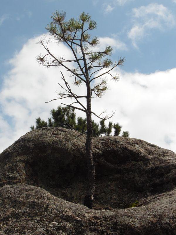 Newborn Tree thumbnail