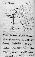 20110520083232Darwin_tree_of_life.jpg