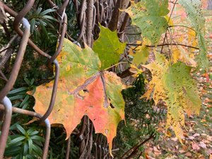 Autumn Rustic thumbnail