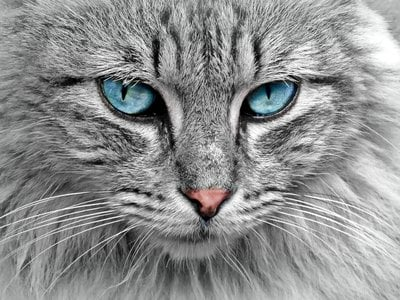 A new article suggests that cats have been underutilized in studies of genetic disease and that studying their genomes, which are structured similarly to humans', could yield new treatments.