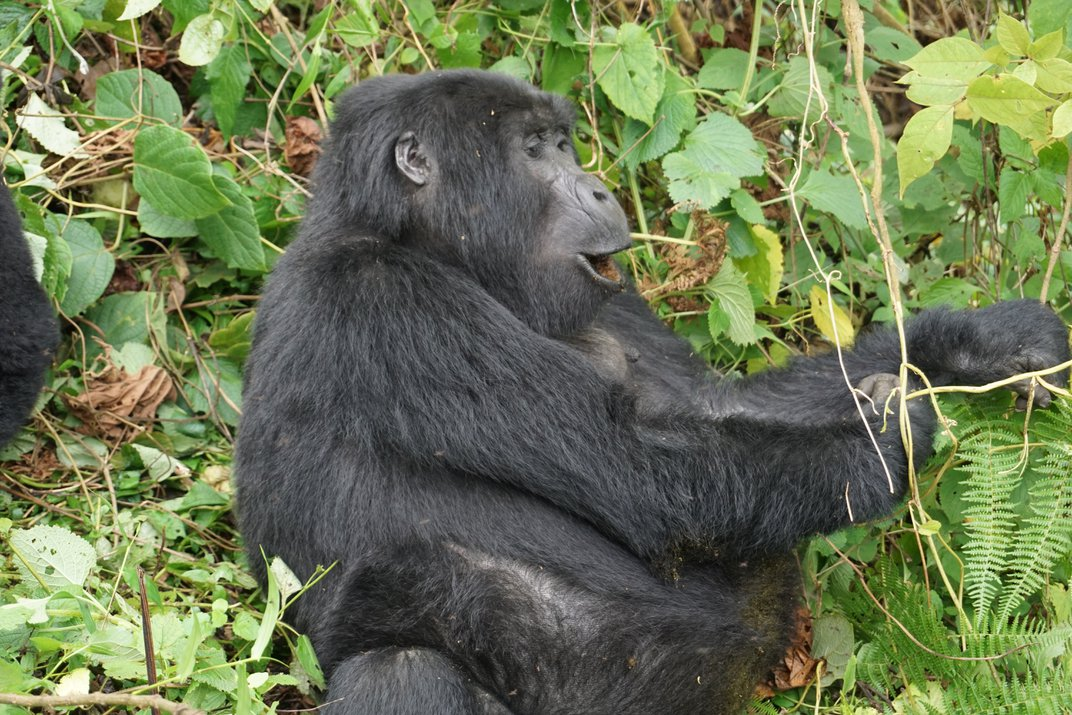 A Visit to the House of the Mountain Gorillas