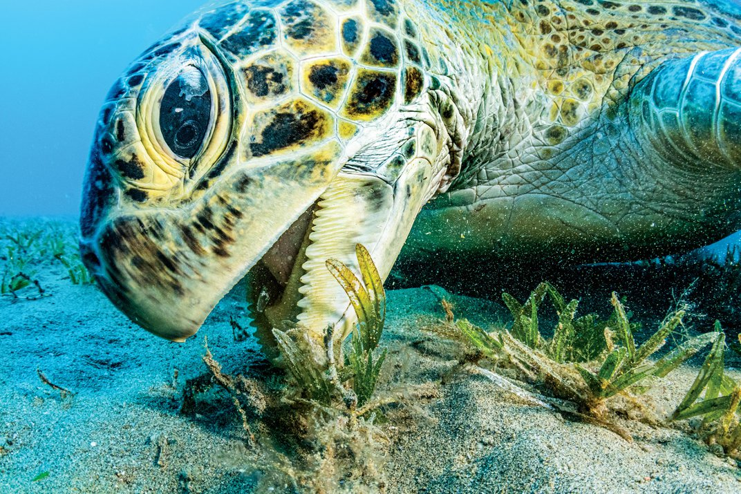Why Seagrass Could Be the Ocean's Secret Weapon Against Climate Change