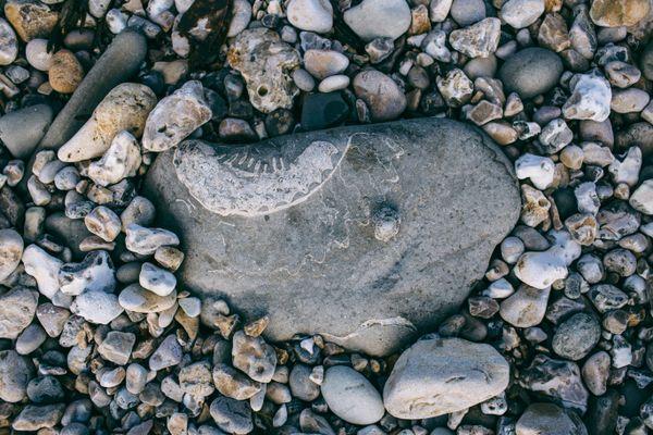 Jurassic Coast Fossil thumbnail
