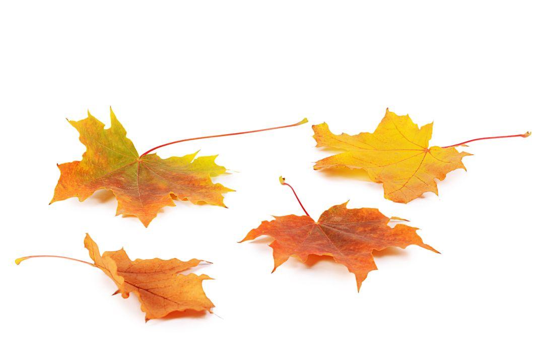 Deciduous trees grow broad leaves