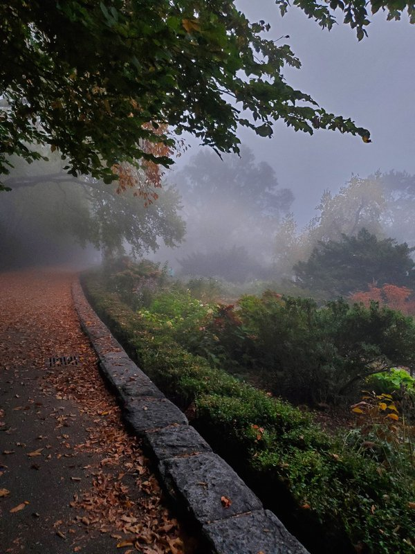 Fort Tryon Park-Heather Garden Blanketed in Fog thumbnail